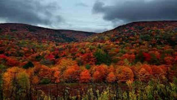 HALE, KERMIT: Fall1.jpg